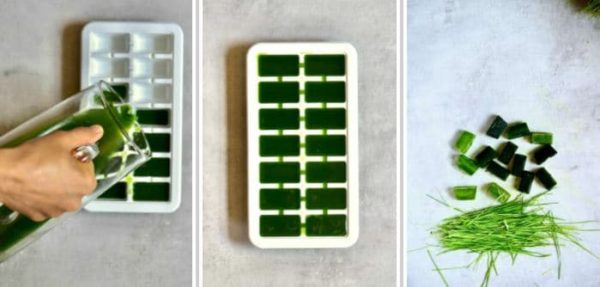 frozen wheatgrass juice in a large ice cube tray
